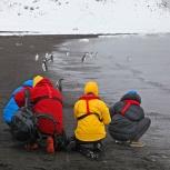 Antarktis 2012 Pingvinfotografering kopia