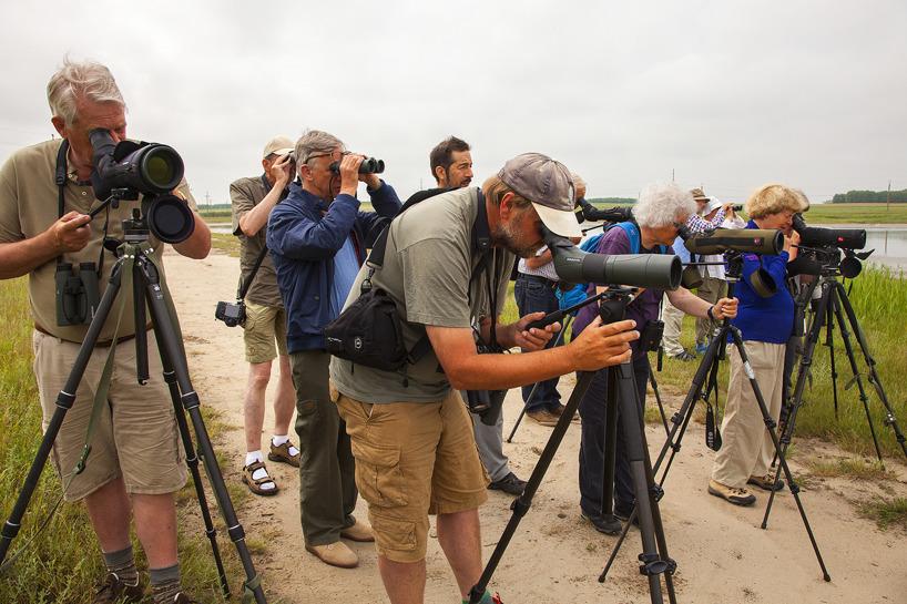 Mina fågelskådande, danska vänner vid saltsjön Murighiol, söder om deltat.