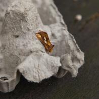 Gulbrunt metallfly I 160813