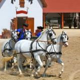 Fyra vita hästar och vagn II