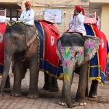 INDIEN Tama elefanter i Jaipur