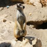 Surikat I, Namibia