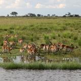 Lechweantiloper, Botswana