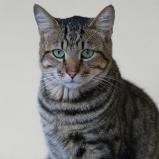 SYDAFRIKA 2014 Katten