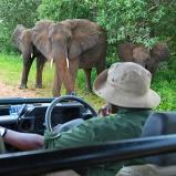 Elefantfamilj, Botswana