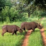Noshörning, Zimbabwe