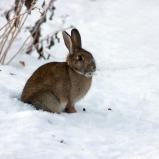 Kanin i vår trädgård