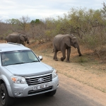 SYDAFRIKA 2014 Krugerparken med bilar II 150 dpi kopia