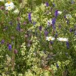 Blomsterängen I 170706