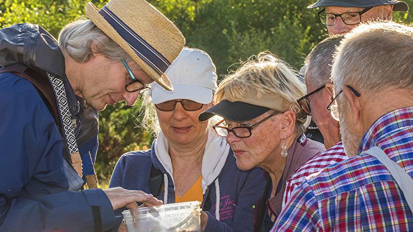 GBF:s småkrypsgrupp under ett besök vid ängarna 2017-08-16.