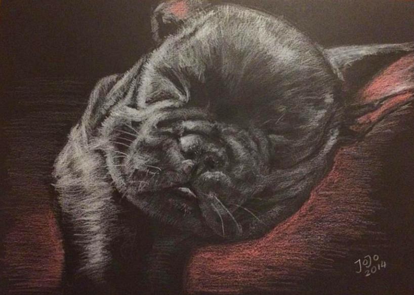 Bulldog, valp Vit och röd krita på svart kartong