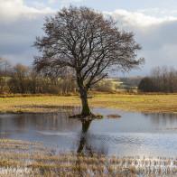 Träd på Hovdalafältet II 171129 kopia 2