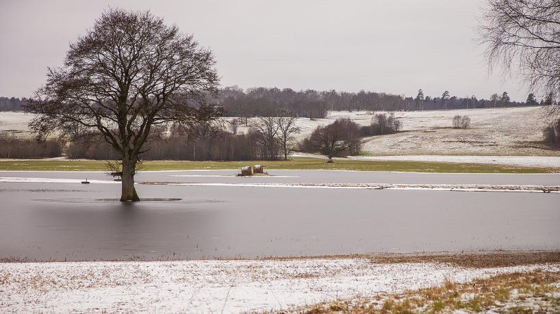 Stora översvämningar på Hovdalafälten i januari - och en hel del övervintrande fåglar, bl a svanar, änder, hägrar, trutar och måsar. Och några övervintrande tofsvipor och starar.
