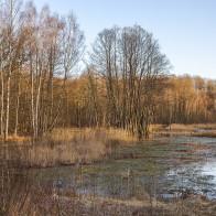 Våtmark Mölleröd I 180411 kopia