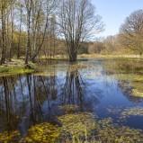 Våtmark Mölleröd I 160504 kopia