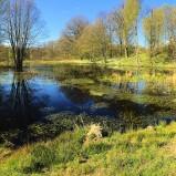 Våtmark Mölleröd I 160504 kopia 2