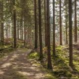 Skog vid Möllesjön III 180409 kopia