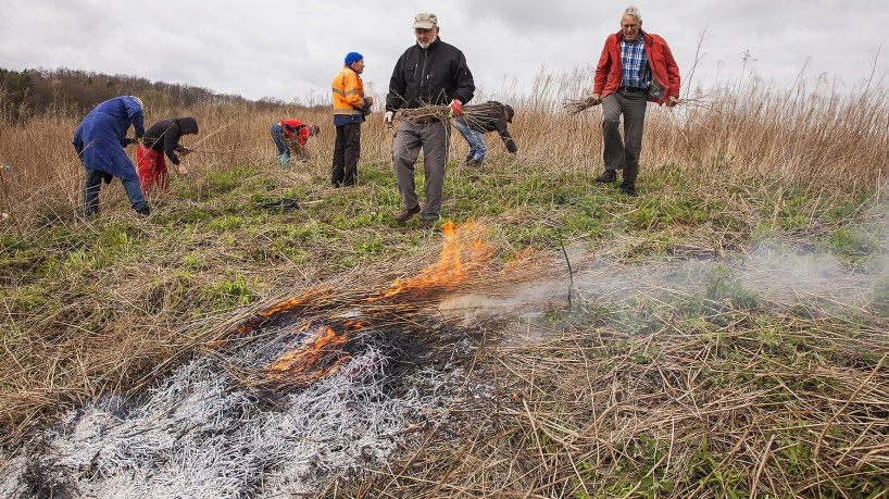 Bränning av kanadensiskt gullris vid Ignaberga kalkbrott - ett första test 2018-04-27.