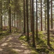 Skog vid Möllesjön III 180409