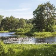 Gårdsjön II 180609 kopia