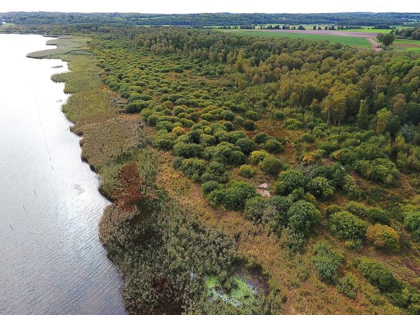 En 800 m lång sträcka har betats under sommaren av drygt 20 kor - se staket i sjön tiil vänster!