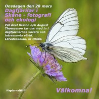 Dagfjärilar 180328 kopia