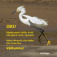 Fågelgruppen 180918 kopia
