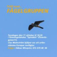 Fågelgruppen 181011 kopia