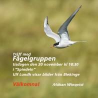 Fågelgruppen 181120 kopia