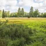 Slåtteräng Hovgården I 180724 kopia