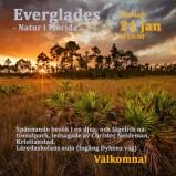 Everglades 190121