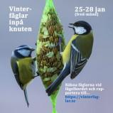 Vinterfåglar 2019 150 dpi