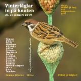 Vinterfåglar 2019 150 dpi kopia