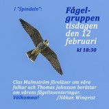 Fågelgruppen 190212 kopia