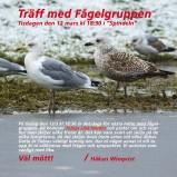 Fågelgruppen 190312 kopia