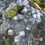Bioblitz 2019 Sten med lavar I 190824