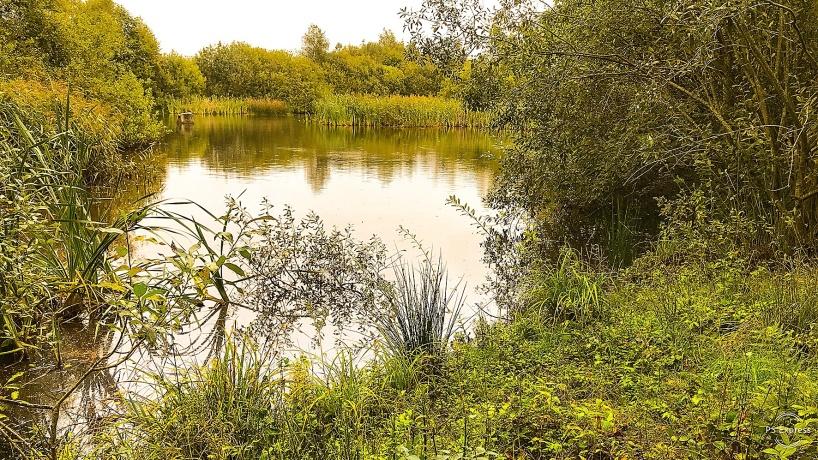 2019-09-15: Stoby våtmark har blivit kraftigt igenväxt, både i och runt själva våtmarken.