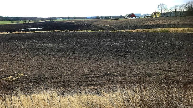 Mjölkalångafälten den 15 januari; 11 grader varmt (!) och stora flockar med svanar och gäss