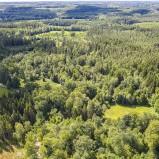 Hågnarp, norr, skogen I 200725 kopia
