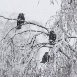 Kaja i snö I 210113