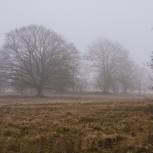 Hovdalafältet i dimma I 210124 kopia
