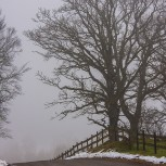 Träd i dimma II 210124 kopia