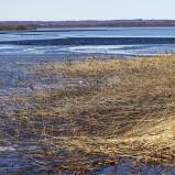 Finjasjöns med isråkar I 210305 kopia