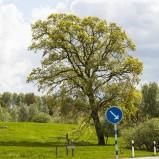 Hovdala träd I 210522 kopia