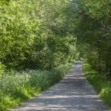 Sommarväg Äspehöjden I 210605 kopia