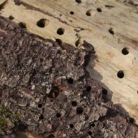 Insektshål I 210326 kopia