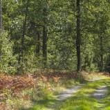 Skogsvägen I 210909 kopia