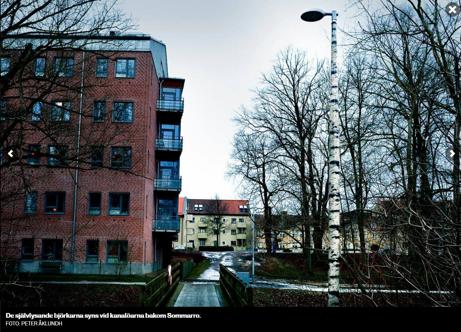 Björkstolpar på plats i Kristianstad centrum