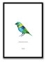 GREEN-HEADED TANAGER POSTER