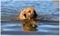Belle i vatten_04